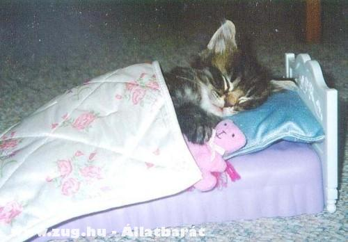 Édes álomban a cica