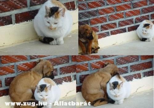 Egy barátság