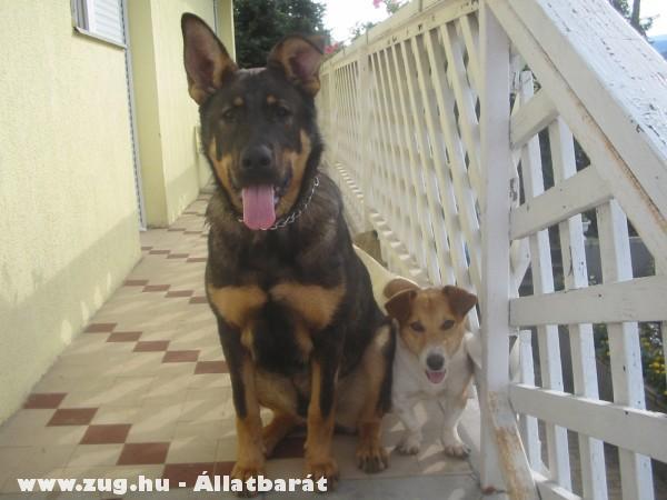 Rocky és Spotty