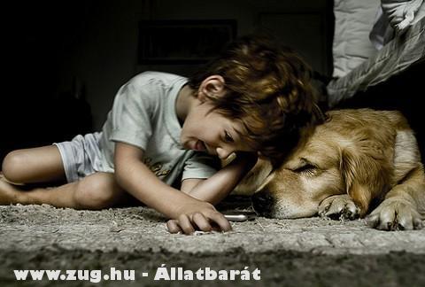 Szeretem a kutyákat!