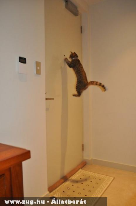 Kiváncsi cicaa