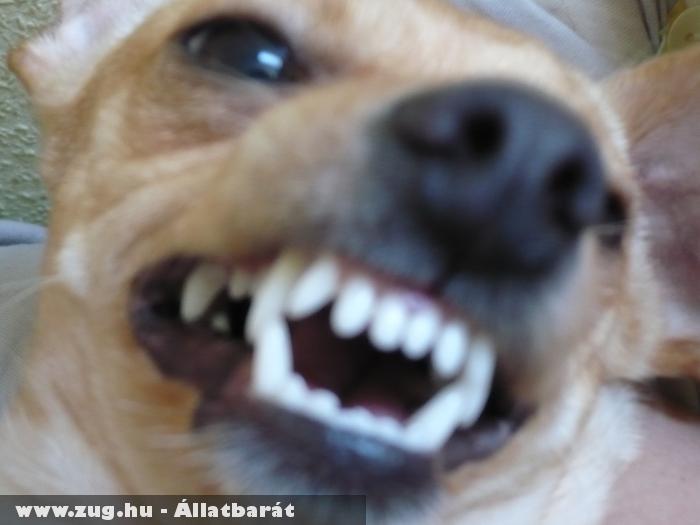 Szép fehér fogaim vannak mi?