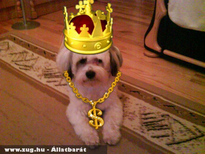 Pamacs a király :D