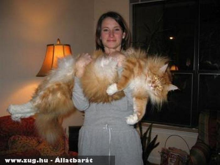 Óriás macska