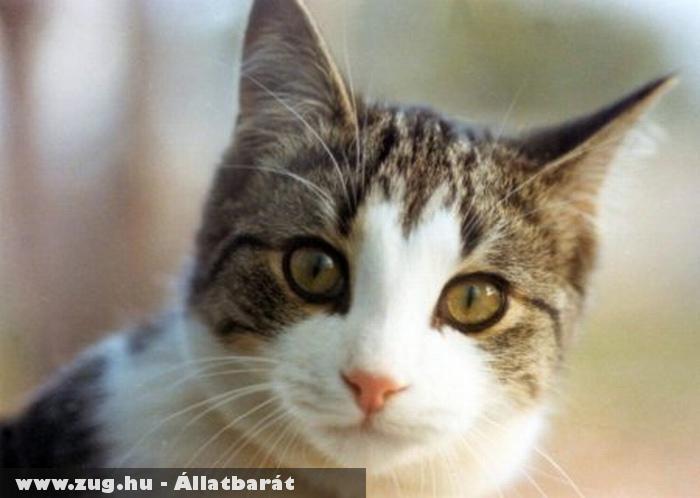 Cirmi cicus, szeretem!