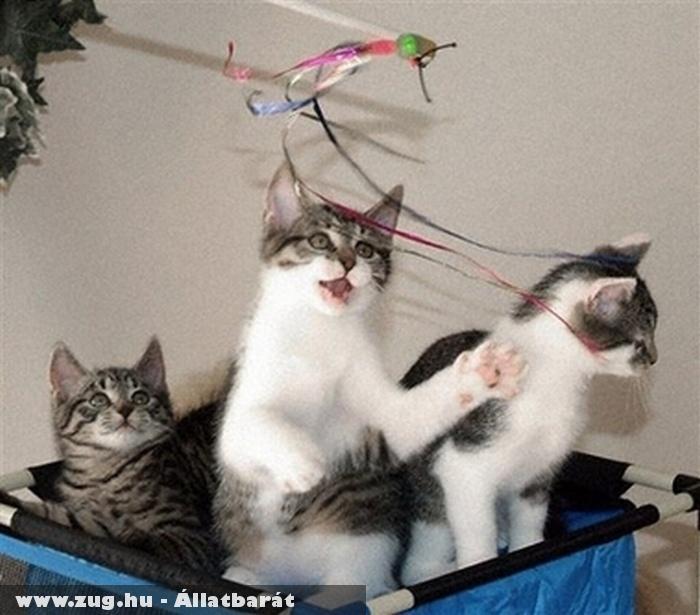 Cicajátszótér - macskák a zsákban