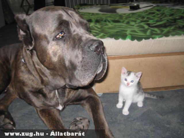 Argosz és barátja
