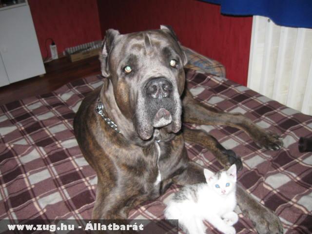 Argosz+cica