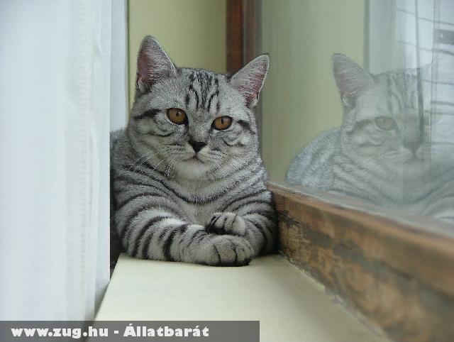 Whiskas cica