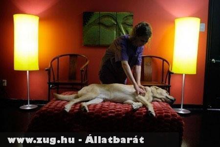 Kutya masszázs