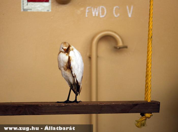 Mexikó, Ennek a madárnak szerencséje volt