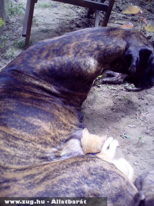 Zeta (kutya) és Tobi (cica)