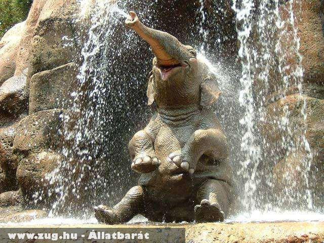 Zuhanyzó elefánt