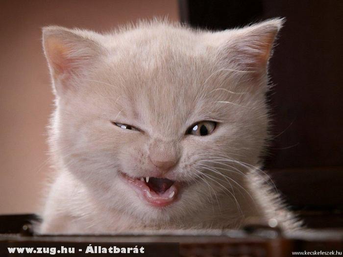 Kacsintó cica 1.