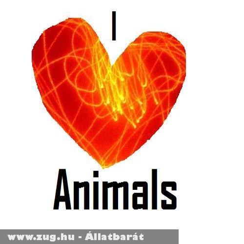 I love animals 1.