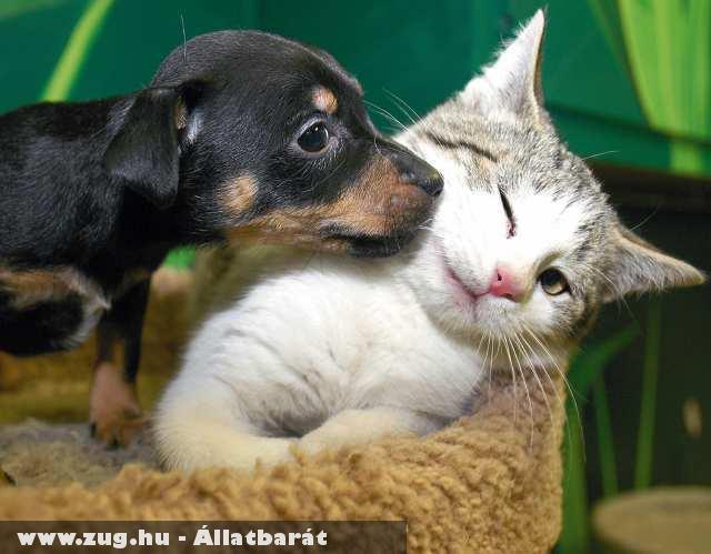 Kutya, macska barátság