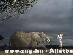 Elefáán és kisgyerek :)