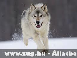 Futás! :)