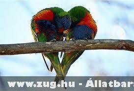 Papagáj szerelem :)