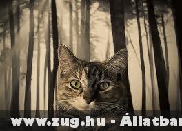 Cica az erdõben