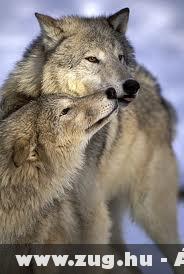 Adj egy puszit édesem!  :)