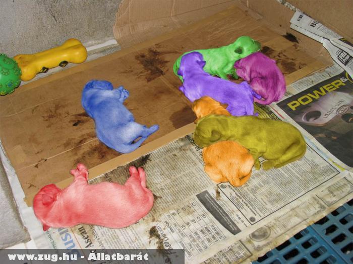 Állatkínzás a kölyökkutyák szõrfestése?!