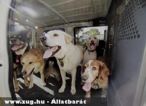 Kutyák a taxiban