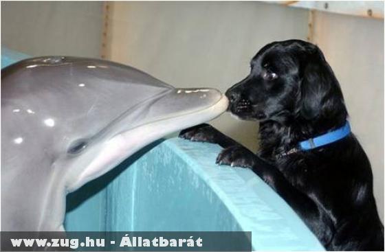 Kutya a delfináriumban