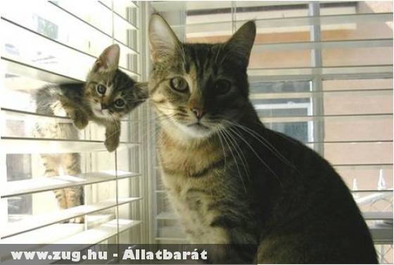 Macskák és a reluxa