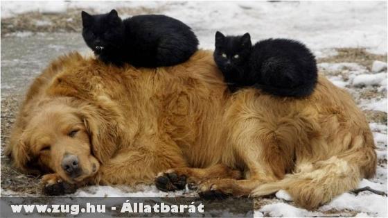 Kutya és macskák
