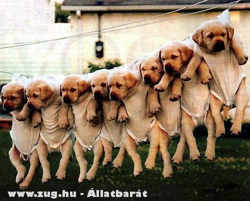 Kutya szárítás