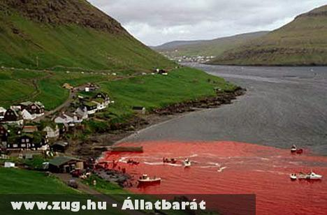Vörösre festette az öböl vizét a bálnavér