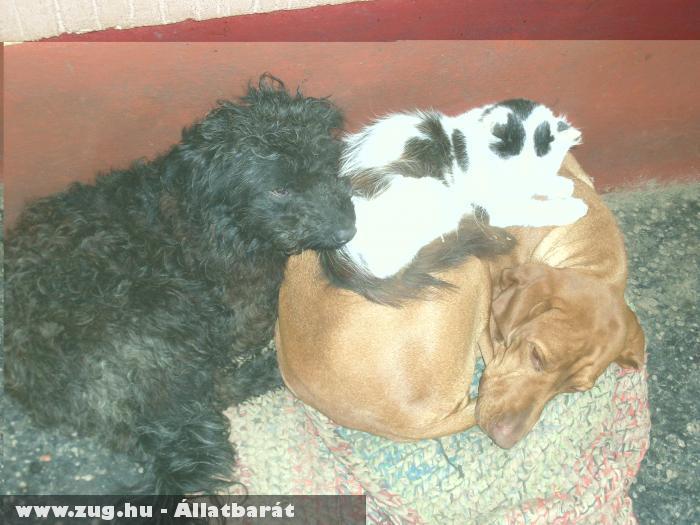 Kutyus - cicus barátság