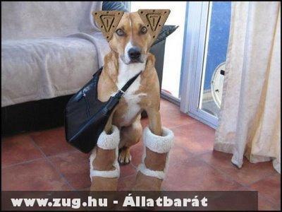Téliesített kutya