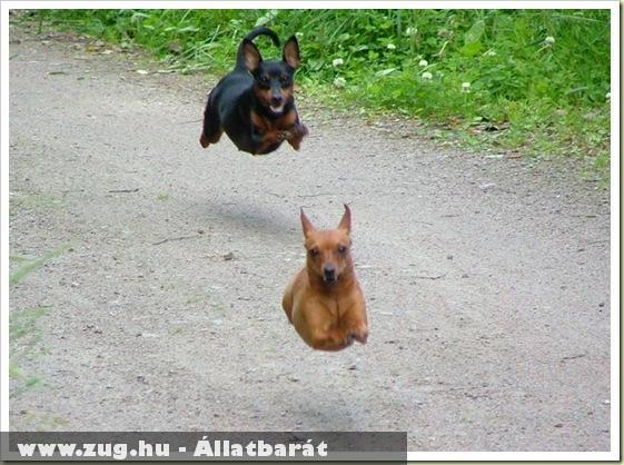 Repülõ kutyák