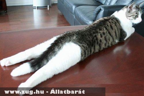 Macska szieszta
