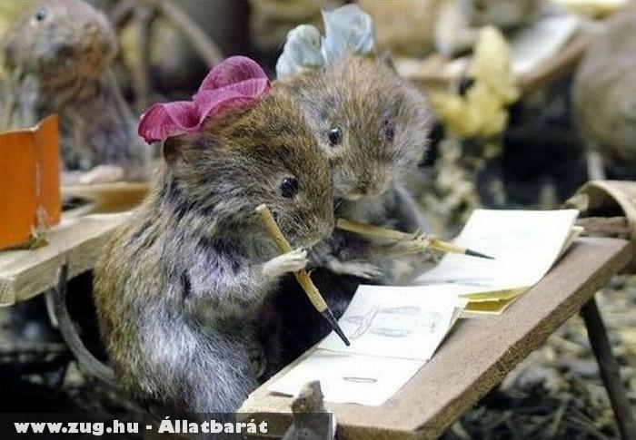 Patkányiskola