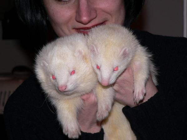 Még hogy az albínó görik nem szépek!