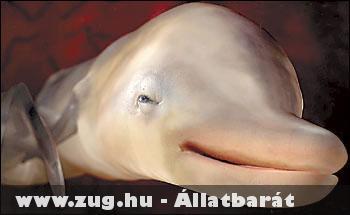 Nyitott szemmel alszik a delfin