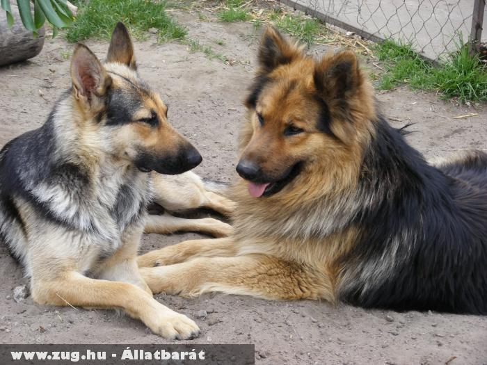 Zséda és Klutor