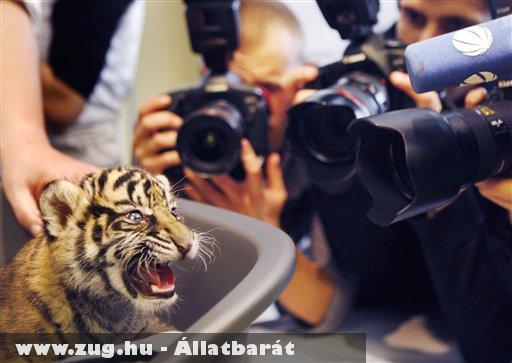 A Frankfurti állatkert új jövevénye