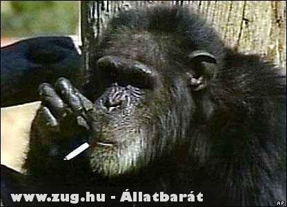 Charlie a dohányzó majom