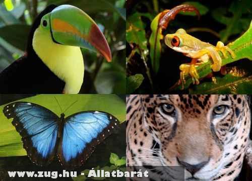 Veszélyeztetett trópusi állatok