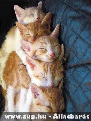 Közös cica alvás