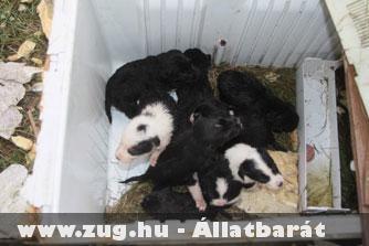 Kidobott kiskutyák a hûtõben