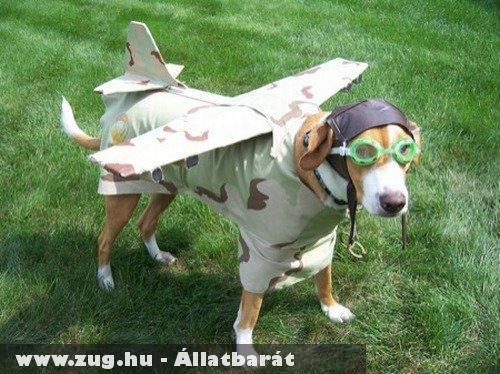 Pilóta kutya