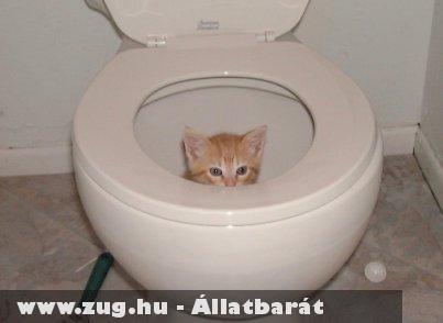 Cica a vécében