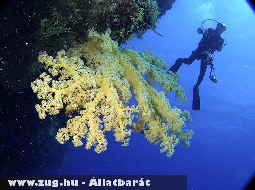 Eltûnnek a tengeri korallok?