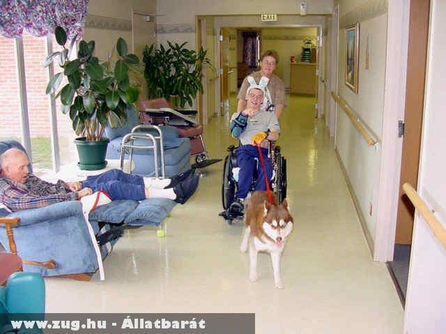 Állat terápia