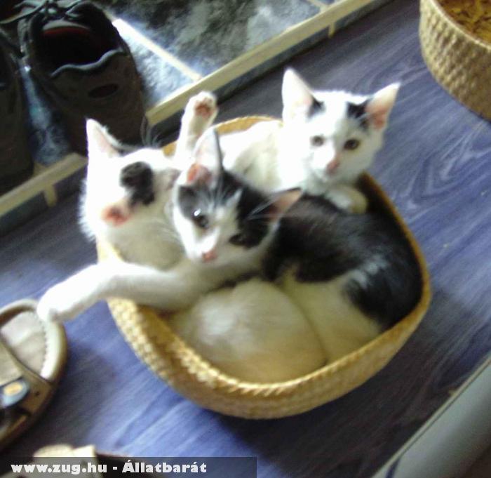 sok jó macska kis helyen...